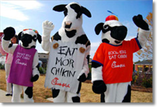 Have fun with the cows at Chick-fil-A at Ellijay